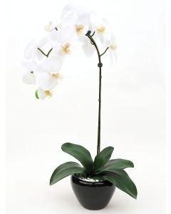 Orchid Arrangement B