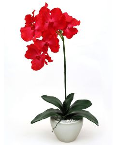 Orchid Arrangement D