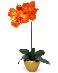 Orchid Arrangement G