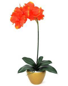 Orchid Arrangement H