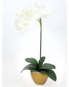 Orchid Arrangement I