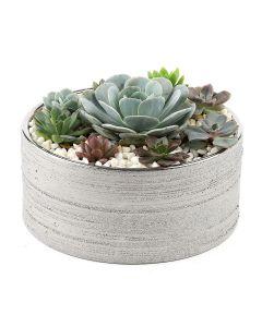Succulents-010