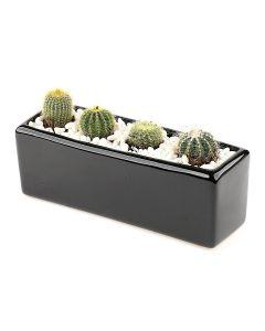 Succulents-011