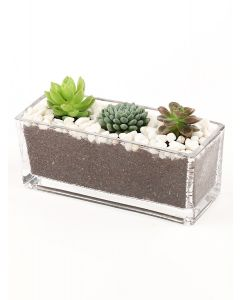 Succulents-012