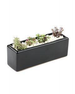 Succulents-002