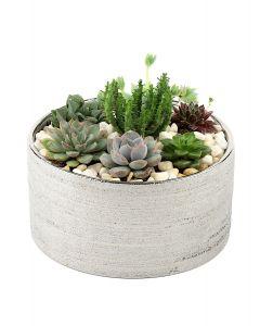 Succulents-004
