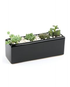 Succulents-005