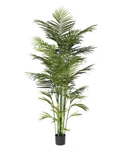 Areca Palm Potted-7'