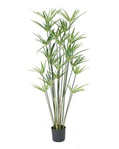 """Cyperus Plant Potted-43"""""""