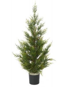 Conifer Pine Tree-3'