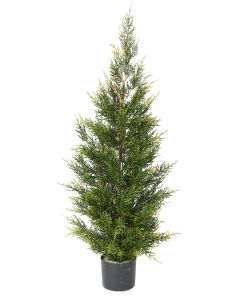 Conifer Pine Tree-4'