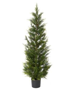 Conifer Pine Tree-6'
