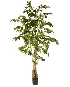 Classic Ficus Tree Potted-5'