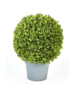Boxwood Ball Potted-22""