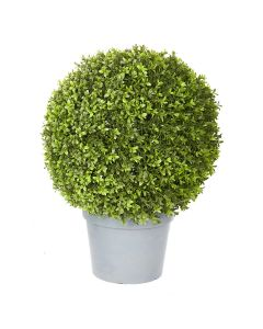Boxwood Ball Potted-26""