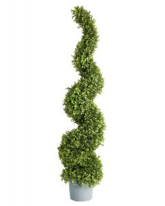 Boxwood Spiral Topiary Potted-58""