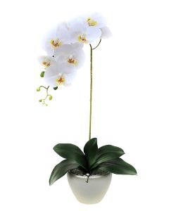 Orchid Arrangement A