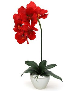 Orchid Arrangement C
