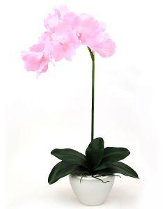 Orchid Arrangement E