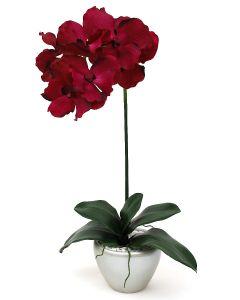 Orchid Arrangement F