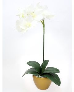 Orchid Arrangement I