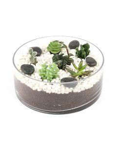 Succulents-027