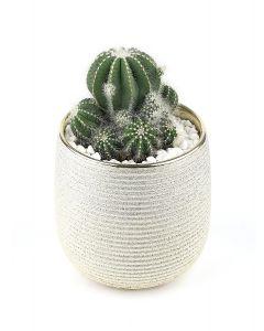 Succulents-033