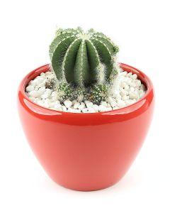 Succulents-015