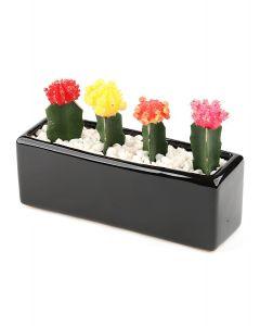 Succulents-018