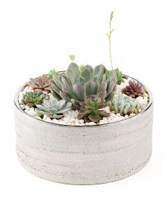Succulents-025