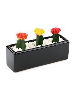 Succulents-003