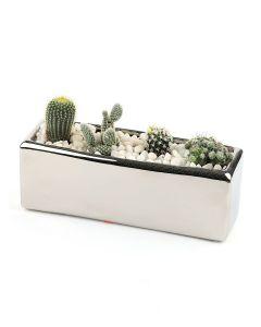 Succulents-006