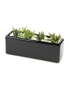 Succulents-007