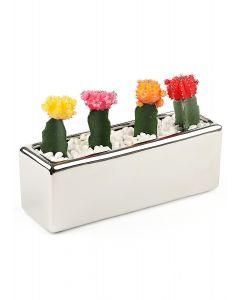 Succulents-008