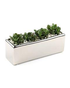 Succulents-009