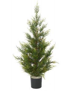 Conifer Pine Tree-3'