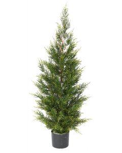 Conifer Pine Tree-4'