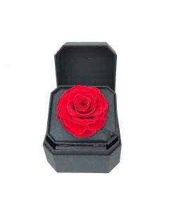 Square Rose Box-Red